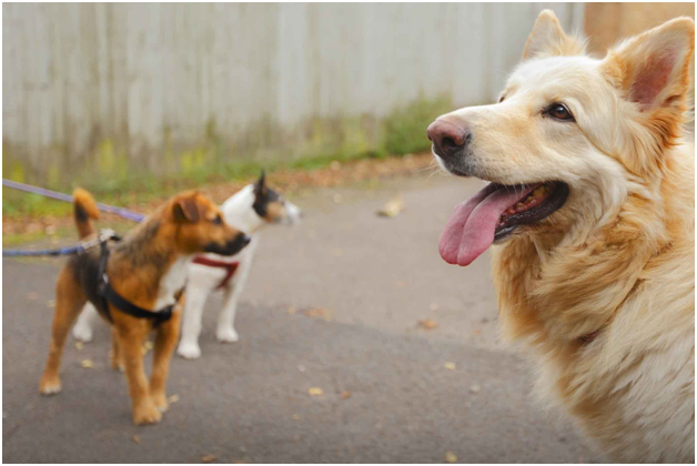 Joint Pain In A Dog